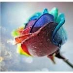 [Алмазная вышивка] Радужная роза
